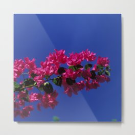 blossoms in the sky 1 Metal Print