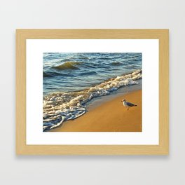 Gull Walking the Beach Framed Art Print