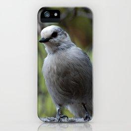 Gray Jay iPhone Case