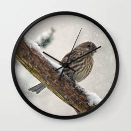 Facing the Storm (House Finch) Wall Clock