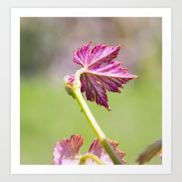 the vine is growing Art Print