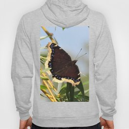 Mourning Cloak Butterfly Sunning Hoody