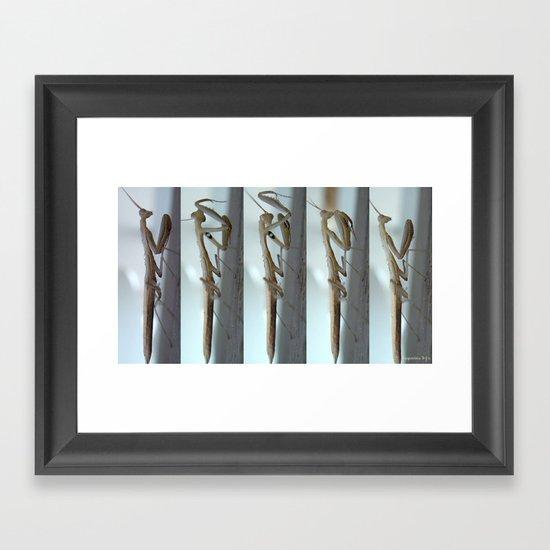 White Praying Mantis Framed Art Print
