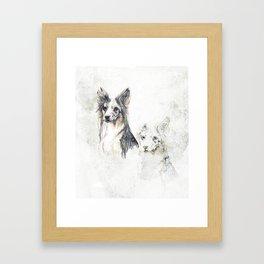 Collie dog Framed Art Print