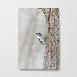 Wintertime Downy Woodpecker Metal Print