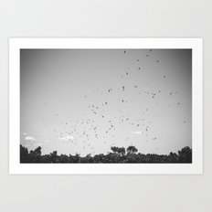 Kite Hawks  Art Print