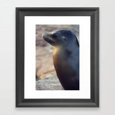 sea lion profile Framed Art Print