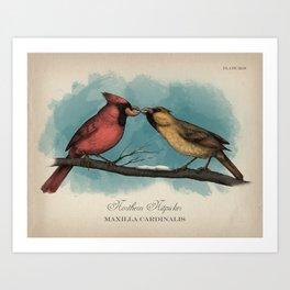 Northern Nitpicker - Maxilla Cardinalis Art Print