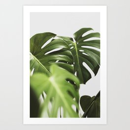 Verdure #10 Art Print
