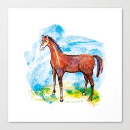 Horse colourfull illustration Canvas Print