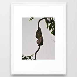 3-toed Sloth Framed Art Print