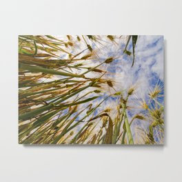 wheat in the clouds Metal Print
