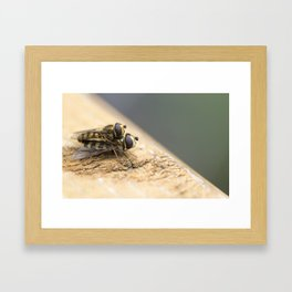 Mating Insects Framed Art Print