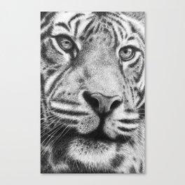 Mr Tiger Canvas Print