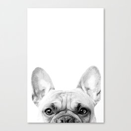 Bruno The French Bulldog Canvas Print