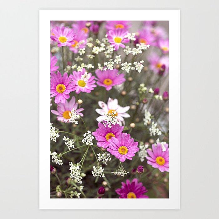Pink Daisy Wildflower Summer Meadow Art Print