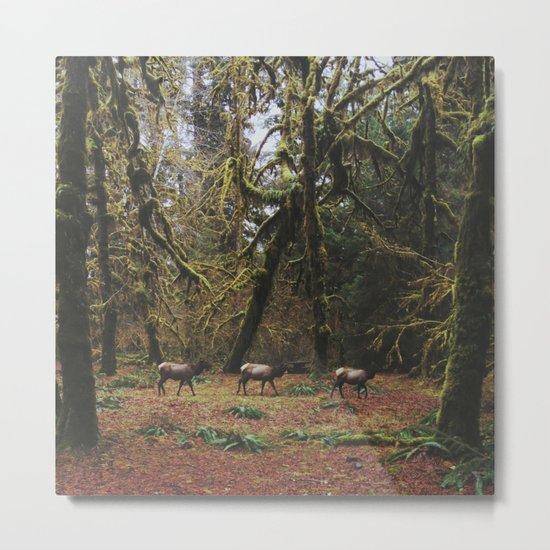 Rainforest Elk Metal Print