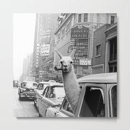 Llama-Linda with pipe Metal Print