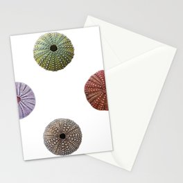 Sea Urchins Scheleton Dead Empty Shells Perforated Echinoidea Stationery Cards
