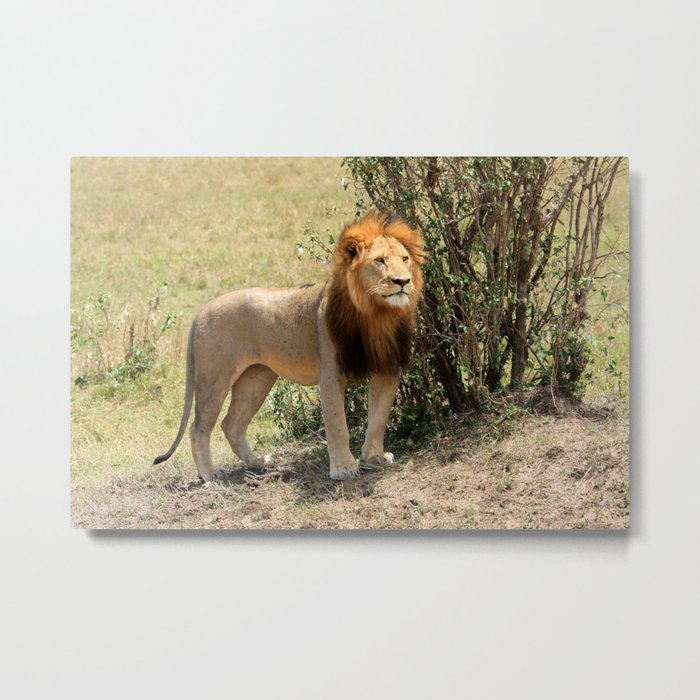 King Of The Savannah Metal Print