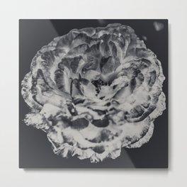Desert Rose in Black and White Metal Print