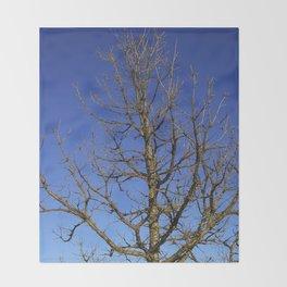 Bur Oak, Quercus macrocarpa, Wisconsin tree, prairie, savanna Throw Blanket