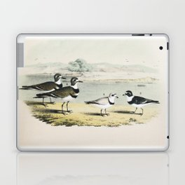 PLATE XL The Killdeer Plover The piping Ringed Plover The Semi-palmated, Ring, or Ring-neck Plover Laptop & iPad Skin