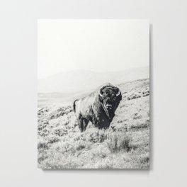 Nomad Buffalo Metal Print