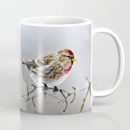 Winter Redpoll Bird Coffee Mug