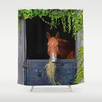 jewish Shower Curtains featuring Home is where the Horse is by Brown Eyed Lady