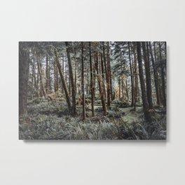 Oregon Coast Forest | PNW Travel Photography Metal Print