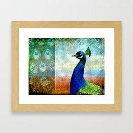 Pretty As A Peacock Framed Art Print