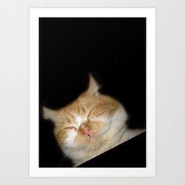 Funny Sleeping Cat Art Print