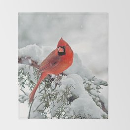 Cardinal on a Snowy Branch Throw Blanket
