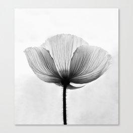 XRAY FLOWER [transparent black white poppy petals] Canvas Print