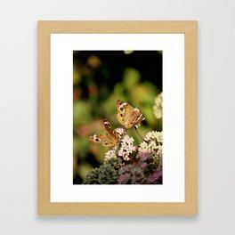 Butterfly Dance Framed Art Print