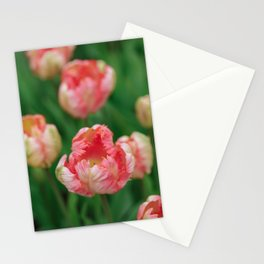 Orange Parrot Tulips Stationery Cards
