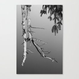 Upside Down Tree 1 Canvas Print