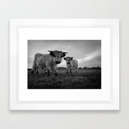 High Park Cow Mono Framed Art Print