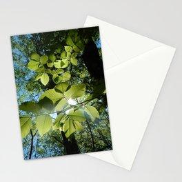 Sunlight Canopy IV Stationery Cards