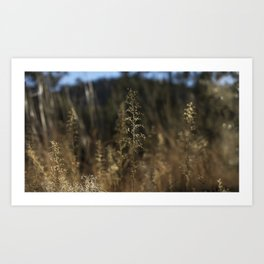 Delicate Grass Art Print