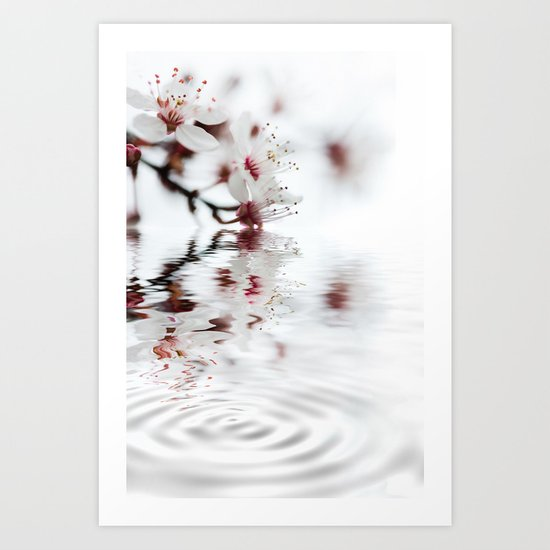white cherry blossom and water reflection Art Print