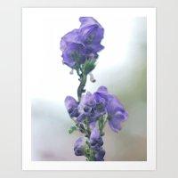 iris Art Prints featuring Iris by Bella Blue Photography