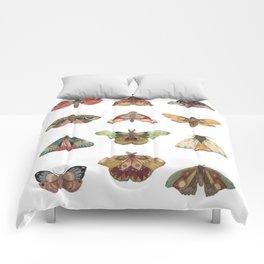 Collector: Moths // Jess Polanshek Comforters