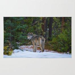 Wolf in Jasper National Park Rug