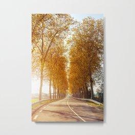 Sunset on strewn asphalt road with trees in autumn season Metal Print