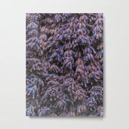 Dead Lavender Metal Print
