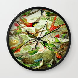 Kunstformen der Natur (Art Forms in Nature)a book of lithographic and halftones. Hummingbirds Wall Clock