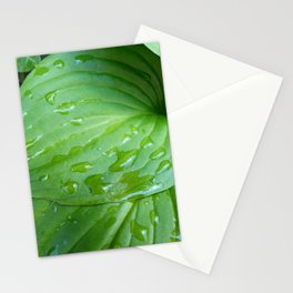 Water Drops on Green Leaves Stationery Cards
