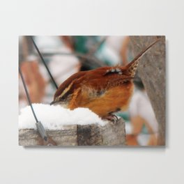 Searching wren Metal Print